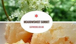meadowsweet tea recipe