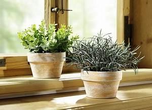 Kräuter Im Topf Online Kaufen : kunstpflanzen textilpflanzen online kaufen brigitte hachenburg ~ Orissabook.com Haus und Dekorationen
