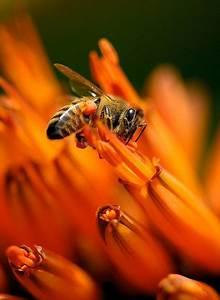 Ameisen Im Blumenbeet : die besten 25 gelber marienk fer ideen auf pinterest ladybird b cher wassertropfen und ~ Whattoseeinmadrid.com Haus und Dekorationen
