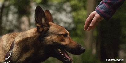 Dogs Military German Dog Shepherd Movie Hero