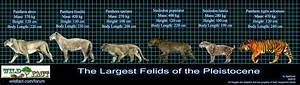 Saber Tooth Tiger Facts For Kids - Best for School ...