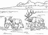 Coloring Elk Lake Lac Nature Bull Printable Sketch Mountain Drawing Coloriages Dessin Shallow Coloriage Album Rocky Colorier Kb American Template sketch template