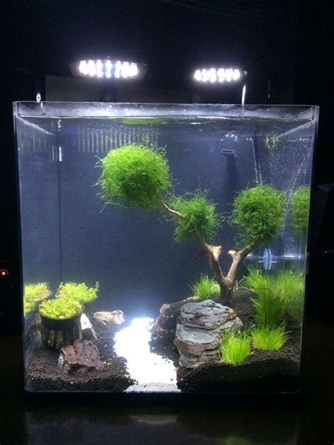 Aquarium Aquascaping Ideas by Aquascape 5 Gallon Tank Search Tanked Betta