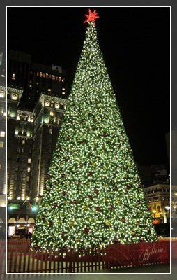 commercial christmas trees wholesale wholesale lights and trees