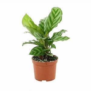 Arbuste D Intérieur : plantes vertes pot vari t s variables autres ~ Premium-room.com Idées de Décoration