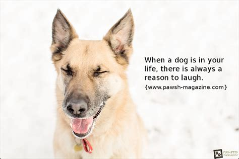 dogs   dog quote  pawsh magazine
