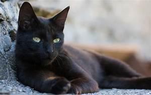 Was Bringt Unglück : schwarze katze gl cksbringer oder ungl cksrabe miau ~ Buech-reservation.com Haus und Dekorationen