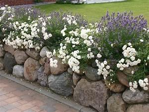 Was Passt Zu Rosen : lavendel 39 hidcote blue 39 lavandula angustifolia 39 hidcote ~ Lizthompson.info Haus und Dekorationen