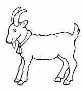 Goat Coloring Goats Sheep sketch template