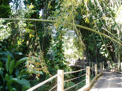 hawaii tropical botanical garden jasmine s blog hawaii tropical botanical garden