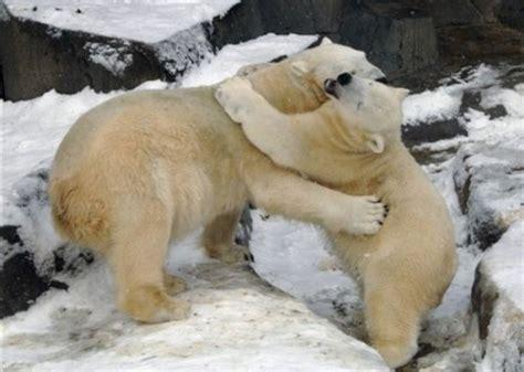 animal hugging pictures  pics amazing creatures