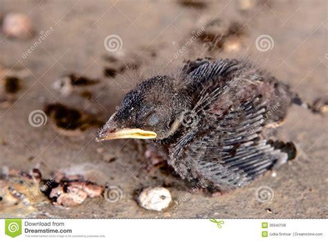baby bird royalty free stock photos image 36940108