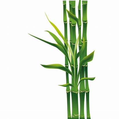 Bamboo Clipart Cartoon Bamboos Grass Leaf Woody