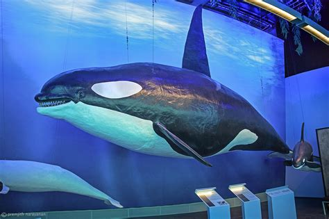 Life Size Gigantic Whales