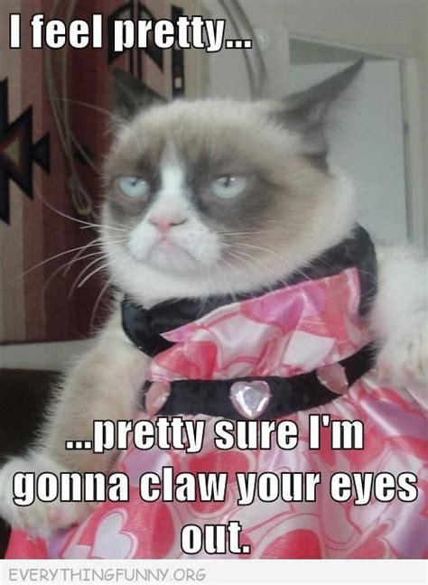 Best Of Grumpy Cat Meme - best of grumpy cat memes guilty pleasures pinterest