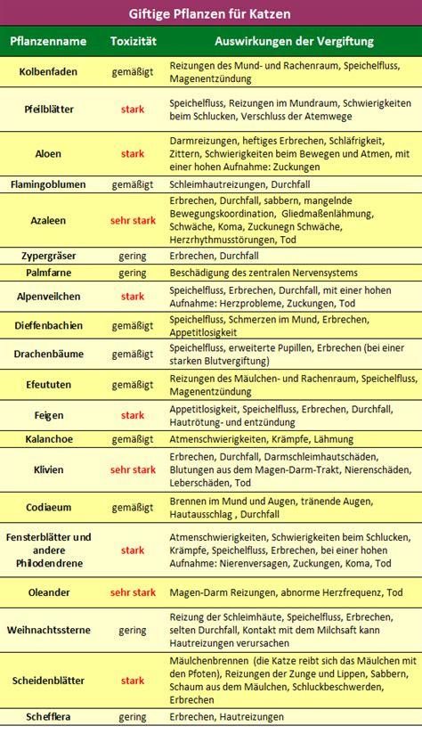 Giftige Zimmerpflanzen Für Katzen by Giftige Pflanzen F 252 R Katzen Welche Pflanze Ist Das