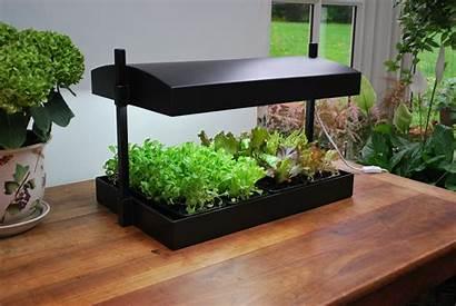 Herb Grow Garden Indoor Plant System Hydroponics