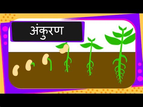 science germination  seed hindi youtube