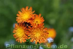 Pflanzen Für Raucher : tabak pflanzen ~ Markanthonyermac.com Haus und Dekorationen