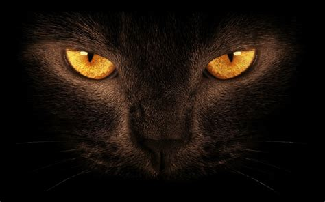 Brown Eyes Cats Hd Wallpapers Beautiful Pictures & Photos
