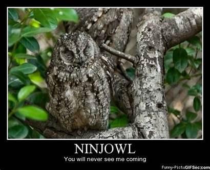 Owl Funny Meme Ninja Camouflage Owls Never