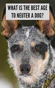 what is the best age to neuter a dog