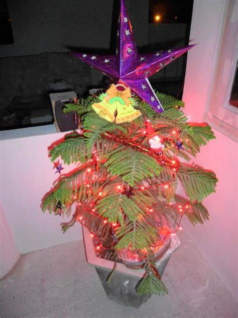 our indian christmas tree blogabond