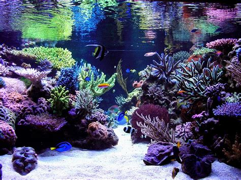 reef aquascaping ideas nano reef forums gt whitten s 30 oceanic money pit