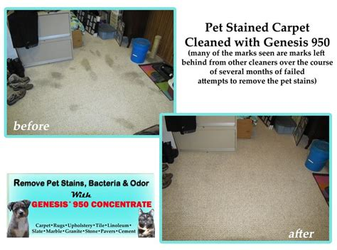 1000+ Images About Best Pet Stain Remover On Pinterest Carpeted Floor Tiles Remove Dog Urine From Carpet Cleaning Glendora Ca Red At The Emmys Capri Care How Much Will Stretch To Dried Wine Repair Milwaukee