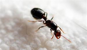 What Does A Queen Ant Look Like? – Wild About Ants