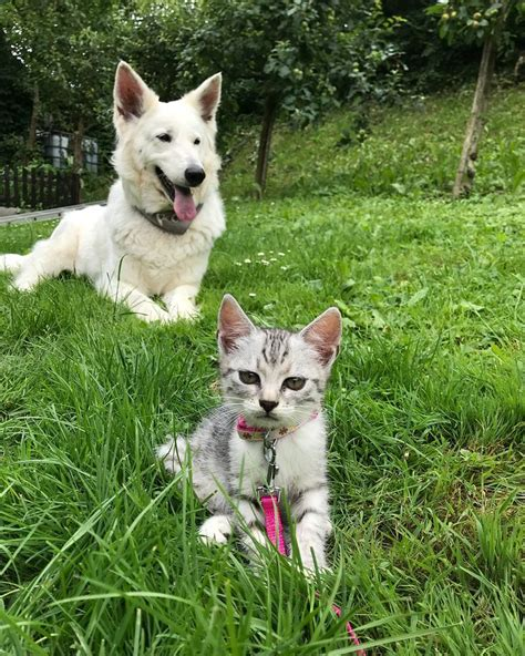 cats than pets better reasons dogs why dog vs cat facts