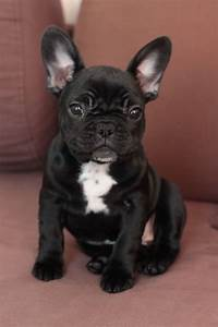 The 25+ best White french bulldog puppies ideas on ...