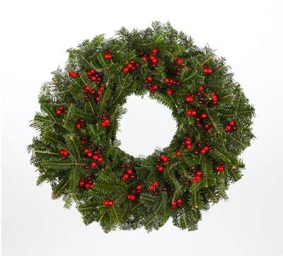red berries real  fraser fir christmas