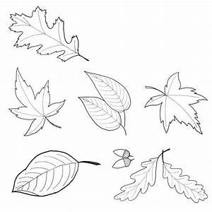 Blätter Vorlagen Zum Ausschneiden : ausgezeichnet herbstbl tter zum ausdrucken zeitgen ssisch ~ Lizthompson.info Haus und Dekorationen