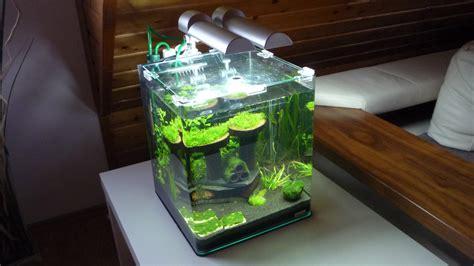 nano aquarium fische welche sind geeignet
