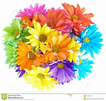 Bouquet Daisy Multicolored Vibrant Flowers Daisys Colorful