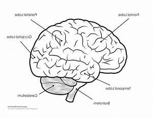 Diagram  Inside Brain Diagram
