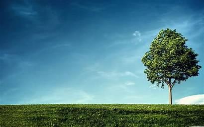 Open Field Wallpapers Tree