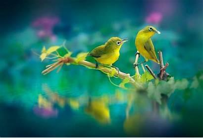 Birds Wallpapers Resolution Laptop 4k Backgrounds Desktop