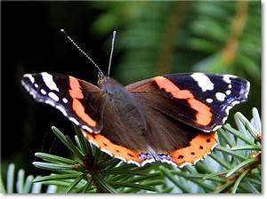 Tiere Im Insektenhotel : fotogalerie tiere schmetterling ~ Whattoseeinmadrid.com Haus und Dekorationen