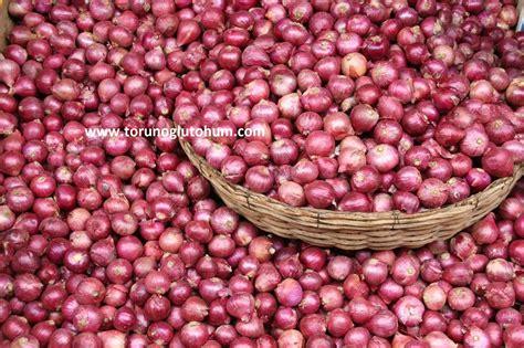 sogan tohumu yem bitkileri cim tohumu tarla bitkileri