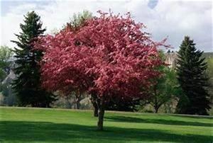 Quand Planter Un Pommier : floraison pommier ~ Dallasstarsshop.com Idées de Décoration