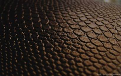 Skin Snake Wallpapers Background Desktop