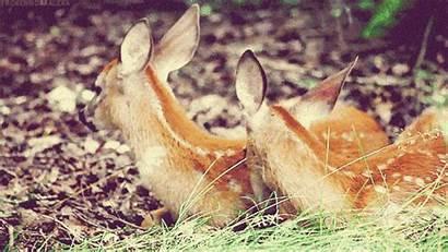 Greek Doe Sacred Animal God Match Deer