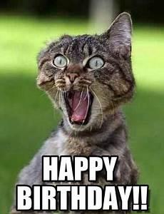 funny birthday meme - Google Search | Funny Animals ...