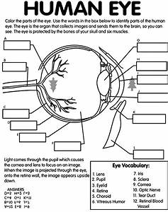 Human Eye Coloring Page With Labeling From Crayola Com
