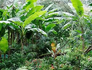 Créer Son Jardin : comment cr er un jardin tropical femme actuelle ~ Mglfilm.com Idées de Décoration