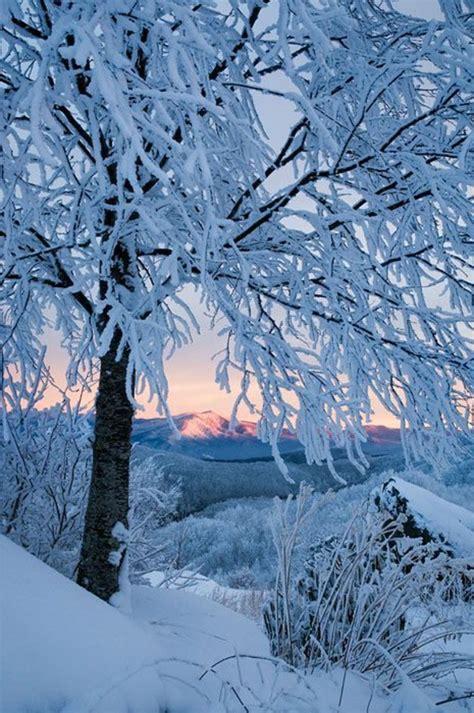 chambre papillon le paysage d 39 hiver en 80 images magnifiques
