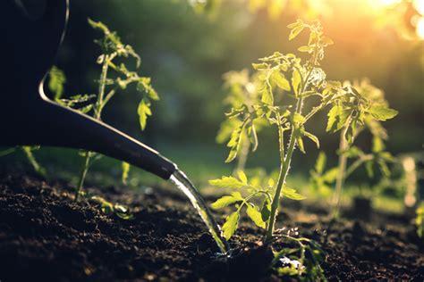 Garten Pflanzen Ohne Gießen by Wie Sie Ihre Pflanzen Richtig Giessen News Leben Wohnen
