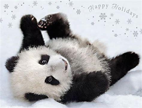 posing pandahappy holidays card